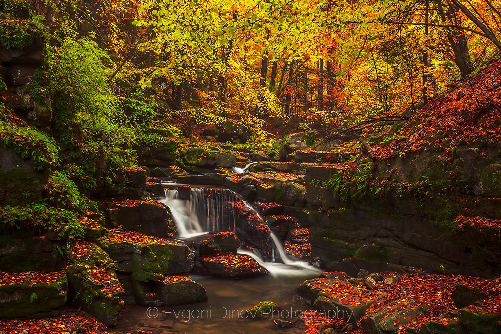 Beautiful rhodopean forest with a river at autumn