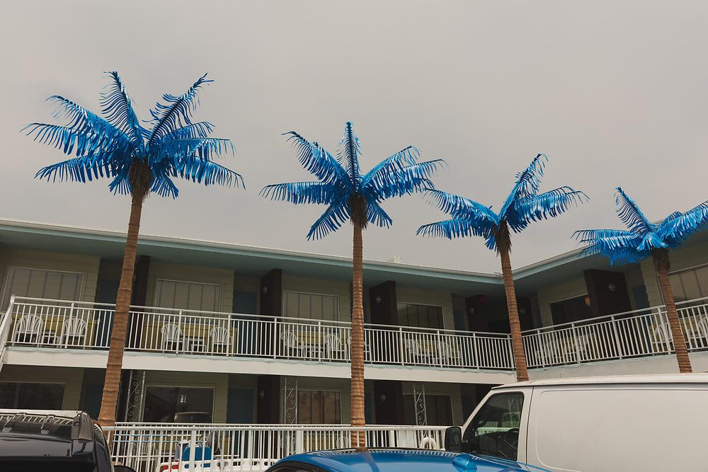 https://Duncan.co/four-plastic-palm-trees