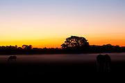 Aquidauana_MS, Brasil...Fazenda Rio Negro no Pantanal matogrossense, Mato Grosso do Sul...The Rio Negro farm in the Pantanal, Mato Grosso do Sul...Foto: JOAO MARCOS ROSA / NITRO