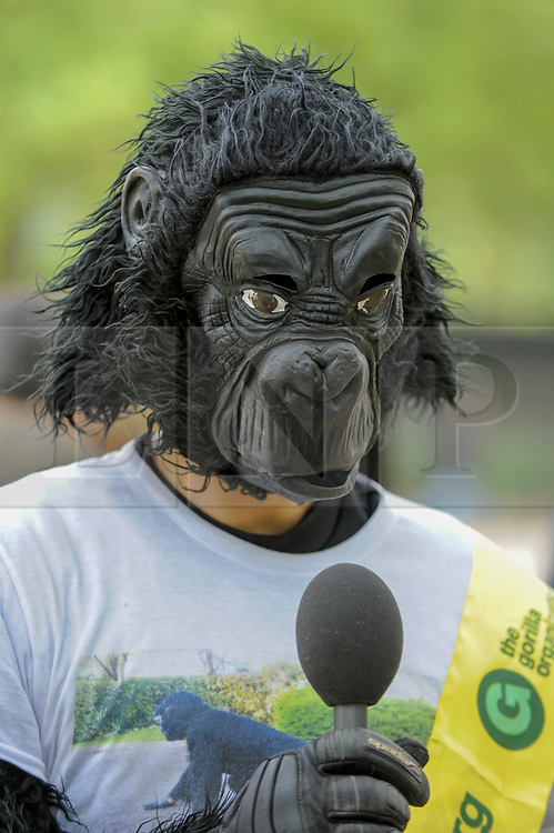 """© Licensed to London News Pictures. 29/04/2017. London, UK. Met Police officer Tom Harrison, 41, known as """"Mr Gorilla"""", celebrates after finally completing the London Marathon after six days of crawling and raising £23,900 for The Gorilla Organisation.   Photo credit : Stephen Chung/LNP"""