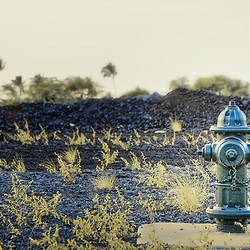 Green fire hydrant amidst lava rock and shrubs. Palm trees are visible in the background.