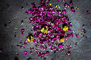 "15th January 2015, New Delhi, India. Flowers and petals left as offerings  for wishes to be granted by Djinns in the ruins of Feroz Shah Kotla in New Delhi, India on the 15th January 2015<br /> <br /> PHOTOGRAPH BY AND COPYRIGHT OF SIMON DE TREY-WHITE a photographer in delhi. + 91 98103 99809. Email:simon@simondetreywhite.com<br /> <br /> People have been coming to Firoz Shah Kotla to leave written notes and offerings for Djinns in the hopes of getting wishes granted since the late 1970's. Jinn, jann or djinn are supernatural creatures in Islamic mythology as well as pre-Islamic Arabian mythology. They are mentioned frequently in the Quran  and other Islamic texts and inhabit an unseen world called Djinnestan. In Islamic theology jinn are said to be creatures with free will, made from smokeless fire by Allah as humans were made of clay, among other things. According to the Quran, jinn have free will, and Iblīs abused this freedom in front of Allah by refusing to bow to Adam when Allah ordered angels and jinn to do so. For disobeying Allah, Iblīs was expelled from Paradise and called ""Shayṭān"" (Satan).They are usually invisible to humans, but humans do appear clearly to jinn, as they can possess them. Like humans, jinn will also be judged on the Day of Judgment and will be sent to Paradise or Hell according to their deeds. Feroz Shah Tughlaq (r. 1351–88), the Sultan of Delhi, established the fortified city of Ferozabad in 1354, as the new capital of the Delhi Sultanate, and included in it the site of the present Feroz Shah Kotla. Kotla literally means fortress or citadel."