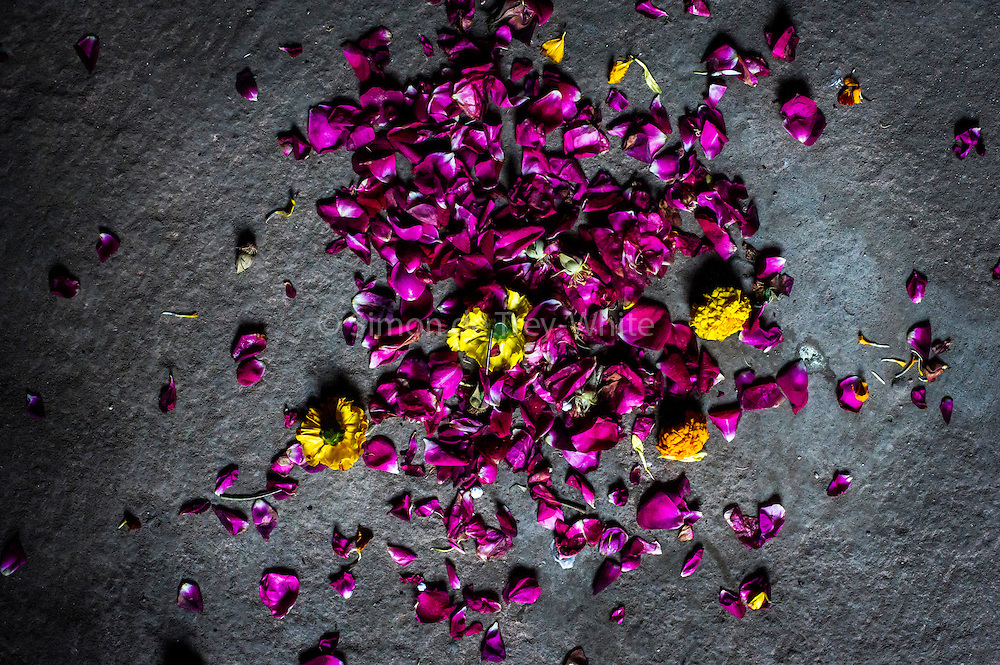 """15th January 2015, New Delhi, India. Flowers and petals left as offerings  for wishes to be granted by Djinns in the ruins of Feroz Shah Kotla in New Delhi, India on the 15th January 2015<br /> <br /> PHOTOGRAPH BY AND COPYRIGHT OF SIMON DE TREY-WHITE a photographer in delhi. + 91 98103 99809. Email:simon@simondetreywhite.com<br /> <br /> People have been coming to Firoz Shah Kotla to leave written notes and offerings for Djinns in the hopes of getting wishes granted since the late 1970's. Jinn, jann or djinn are supernatural creatures in Islamic mythology as well as pre-Islamic Arabian mythology. They are mentioned frequently in the Quran  and other Islamic texts and inhabit an unseen world called Djinnestan. In Islamic theology jinn are said to be creatures with free will, made from smokeless fire by Allah as humans were made of clay, among other things. According to the Quran, jinn have free will, and Iblīs abused this freedom in front of Allah by refusing to bow to Adam when Allah ordered angels and jinn to do so. For disobeying Allah, Iblīs was expelled from Paradise and called """"Shayṭān"""" (Satan).They are usually invisible to humans, but humans do appear clearly to jinn, as they can possess them. Like humans, jinn will also be judged on the Day of Judgment and will be sent to Paradise or Hell according to their deeds. Feroz Shah Tughlaq (r. 1351–88), the Sultan of Delhi, established the fortified city of Ferozabad in 1354, as the new capital of the Delhi Sultanate, and included in it the site of the present Feroz Shah Kotla. Kotla literally means fortress or citadel."""