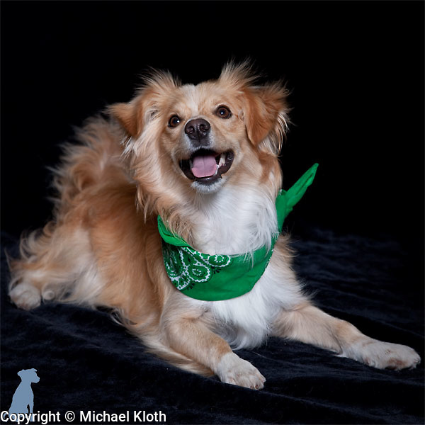 Snoop posing for his adoption portrait.  The green bandanna signifies that he's passed his basic training and is ready to be adopted.  Dog photographs by Michael Kloth.