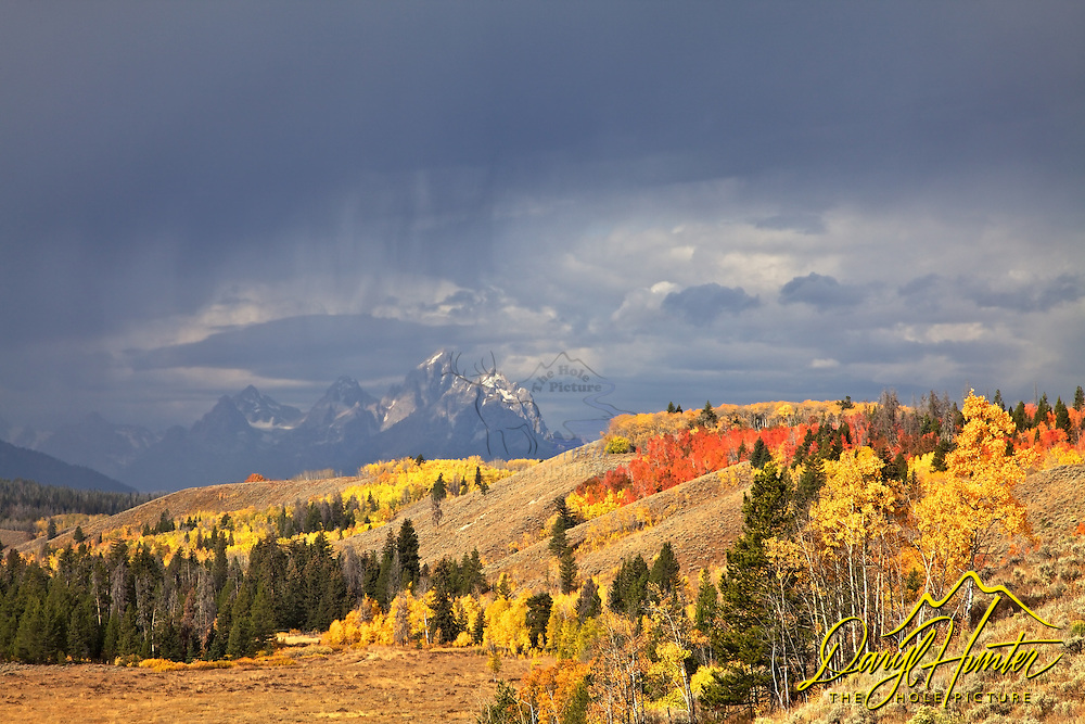Thunderstorm, Fall Colors, Grand Tetons from the Bridger Teton National Forest<br />