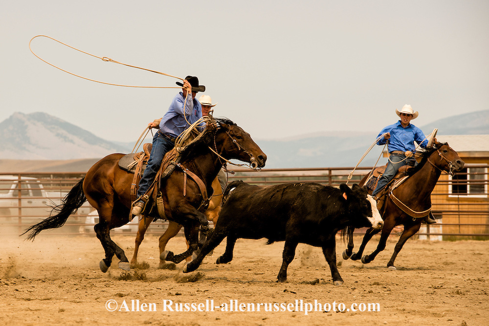Wilsall Ranch Rodeo, Wild Cow Milking  Competition, Kurt Mraz, Cassie Woosley, Cleve Swandal, Lazy SR Ranch team, Montana