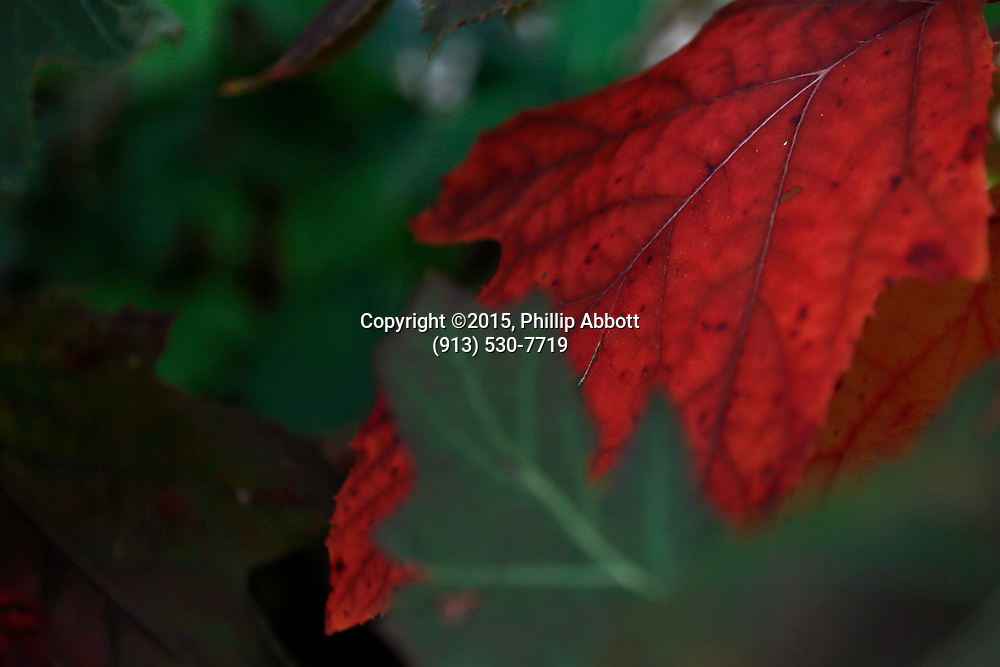09 October, 2015<br /> &copy;2015, Phillip Abbott<br /> Apex Photographic