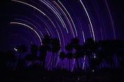 Palm trees with star trails behind them at Thousand Palms, California.