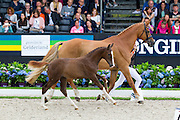 Lelegro<br /> Excellent Dressage Sales<br /> Longines FEI/WBFSH World Breeding Dressage Championships for Young Horses 2016<br /> © DigiShots