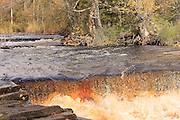 The waters of the Sturgeon River carry a deep-amber, almost coffee-like color, much like the Tahquamenon River in the eastern Upper Peninsula. This color is caused by tannins leached from the vast cedar swamps of the region.
