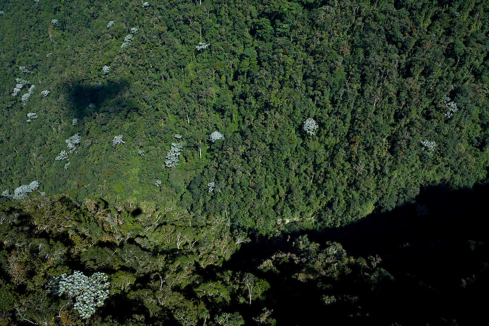 Merida_VEN, Venezuela...Imagem aerea de floresta em Merida, Venezuela...Aerial image of forest in Merida, Venezuela...Foto: JOAO MARCOS ROSA / NITRO