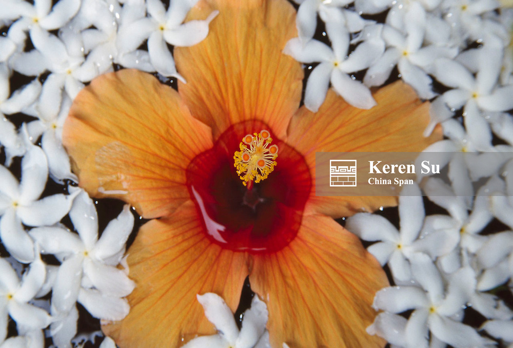Flower decoration on the water, Sri Lanka