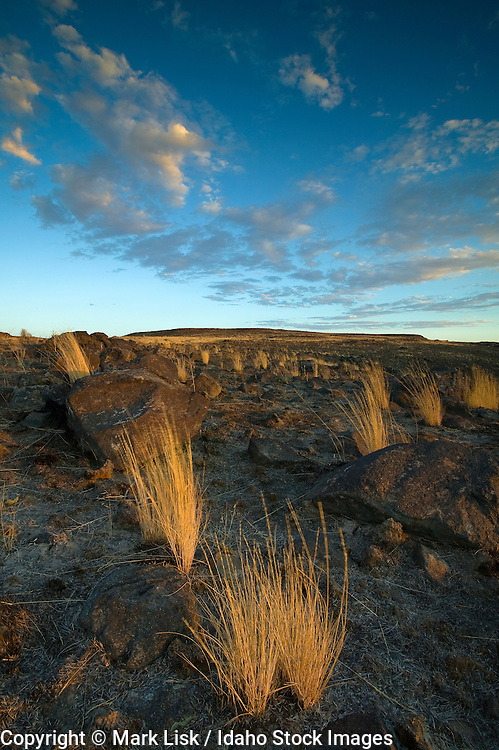 Bunch Grass maintains a strong hold in a burn area of the Owyhee Canyonland near Cougar Creek, Idaho.
