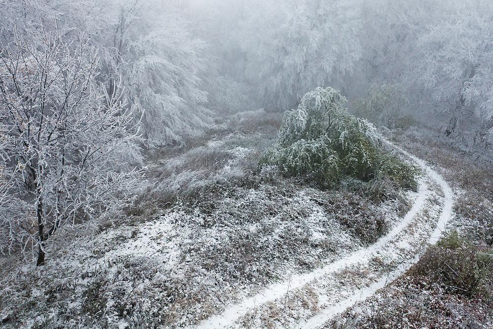 Frozen forest in Sliven Balkan