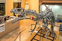"""Vente aux encheres exceptionnelle. Le 10 decembre, a Lyon, vous pourrez acheter un dinosaure. Il s'agit d'un Allosaurus, ancêtre du célèbre T-Rex. Il date d environ 150 millions d annees et a ete decouvert dans le Wyoming aux Etats-Unis par un groupe de paleontologues americains qui ont mis deux ans a l'exhumer et a le monter.Estimation : un million d'euros.Il est tres rare que des dinosaures soient ainsi vendus aux encheres.Avec ses 6 mètres de long et 2,50 m de haut, ce carnivore, chef de file des grands predateurs du Jurassique, vivait principalement en Amerique du Nord, il y a 153 a 136 millions d'annees.Il n'y a presque aucun veritable Allosaurus dans les musees français, en dehors de celui du Museum d'histoire naturelle de Paris, la plupart etant represente par des moulages «C'est tellement rarissime, s'extasie Claude Aguttes, commissaire-priseur. C'est l'objet le plus curieux et le plus insolite que j'ai eu a vendre"""" Prenomme Kan (ce qui signifie « chef » en langue mongole), l'Allosaurus expose a Lyon a l'hotel des ventes Aguttes est dans un etat de conservation remarquable, complet a 75 %  et possedant un crane parmi les mieux conserves du monde.Sa tete est complete à 98 %, avec ses dents d'origine, toutes accrochees à la machoire, ce qui est rarissime. Il n'y en a que 5 dans le monde. Une mine pour les scientifiques qui y voient l'occasion de faire progresser la connaissance.L'une des grandes conditions: que le squelette ait ses papiers en regle avec l'UNESCO,  l'achat de dinosaures etant un business tres lucratif."""