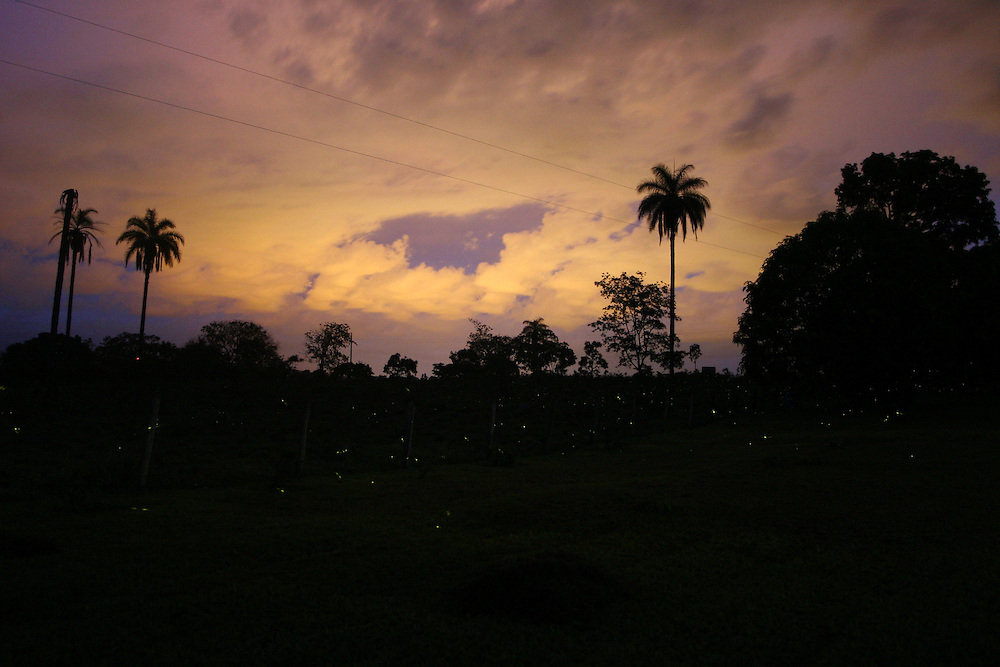 Distrito dos Maias_MG, Brasil...Cena noturna de uma paisagem com vaga-lumes...The landscape night scene with fireflies...Foto: LEO DRUMOND / NITRO