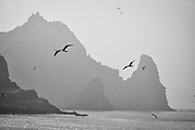 Seagulls fly around the steep cliffs of one of the Dokdo Islands, known to Japanese as Takeshima, sovereignty over which is disputed between Japan and South Korea, in the Sea of Japan on 22 June 2010..Photographer: Robert Gilhooly