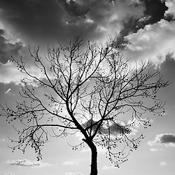 Bare tree and clouds in winter.