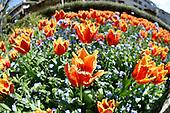 20151005 Botanic Garden Spring Festival