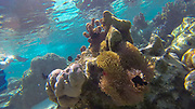 Snorkeling, French Polynesia, South Pacific