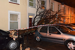 © Licensed to London News Pictures. 03/12/15. Rhymney Street, Cathays, Cardiff, UK. A tree falls over two parked and thankfully unnocupied cars in a terraced street following an intense and squally rainstorm. Photo credit : Ian Homer/LNP.