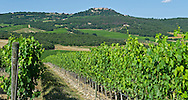 A wine vineyard near Montalcino, Italy.