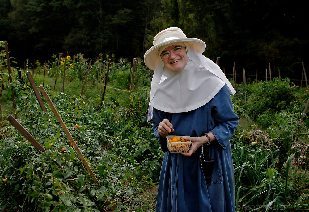 BETHLEHEM, CT- 11 OCTOBER 2005-Sister Angele picks tomatoes in one of the Abbey's vegetable gardens. The Abbey of Regina Laudis follow St. Benedict's &quot;rule&quot; and was the first female Benedictine abbey in the United States.  <br /> (Photo by Robert Falcetti)