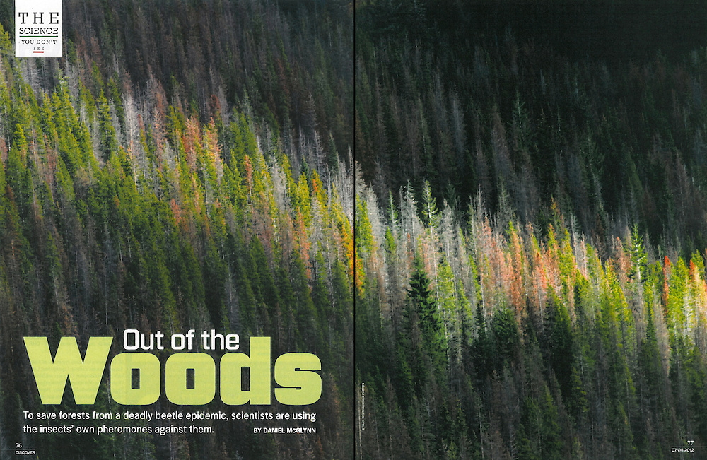 Discover: Out of the Woods (November 2010)