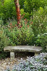 Stone seat with Salvia officinalis 'Purpurascens' ( purple sage ) and Salvia fulgens at the base of Prunus serrula