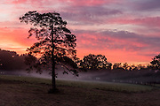 As the morning mist rises on the pastures near Broceliande Forest, dawn paints the sky with red and purple hues.