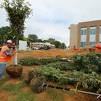 Thomas Wells | Buy at PHOTOS.DJOURNAL.COM<br /> Shane Swinle an employee of Sportsman Lawn and Landscaping helps unload truck loads of trees and other shrubs and landscaping for the new Tupelo Police Headquarters on Front Street Wednesday.