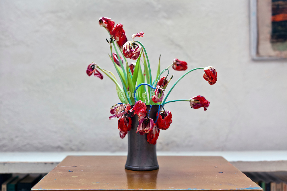 dying tulips in a pot against a white wall