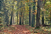 Nederland, Ubbergen, 18-10-2017 Mooi herfstweer zorgt voor gele en oranje kleuren in het bos.Foto: Flip Franssen