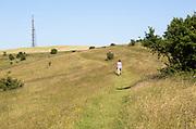 Woman walking on slope of chalk escarpment hillside at Morgan's Hill SSSI, near Calne, Wiltshire, England, UK
