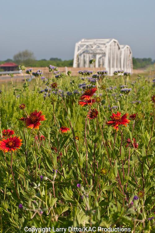 Wildflowers by Llano River bridge in spring