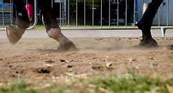 © Licensed to London News Pictures.16/07/15<br /> Harrogate, UK. <br /> <br /> The hooves of a horse raise the dust as it is ridden towards the main arena on the final day of the Great Yorkshire Show.  <br /> <br /> England's premier agricultural show has seen three days of showcasing the best in British farming and celebrating the countryside.<br /> <br /> The event which attracts over 130,000 visitors each year displays the cream of the country's livestock and offers numerous displays and events giving the chance for visitors to see many different countryside activities.<br /> <br /> Photo credit : Ian Forsyth/LNP