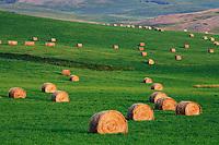 Hay bales near Longview, Alberta