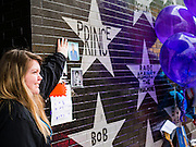 "22 APRIL 2016 - MINNEAPOLIS, MN: A woman touches the star for Prince at a memorial to Prince in front of 1st Ave in Minneapolis. Thousands of people came to 1st Ave in Minneapolis Friday to mourn the death of Prince, whose full name is Prince Rogers Nelson. 1st Ave is the nightclub the musical icon made famous in his semi autobiographical movie ""Purple Rain."" Prince, 57 years old, died Thursday, April 21, 2016, at Paisley Park, his home, office and recording complex in Chanhassen, MN.    PHOTO BY JACK KURTZ"