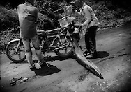 Motorcycle accident on the way to market.  Two men and a 2 m + long barracuda were thrown off the motorcycle when the slippery barracuda shifted, threw off their balance and face first on the main dirt track that serves as the highway to Kribi.  Large fish like this barracuda are caught from dugout pirogue canoes.  Grand Batanga, Cameroon.
