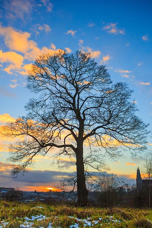 My favourite tree at sunset in Armagh Observatory Astropark.