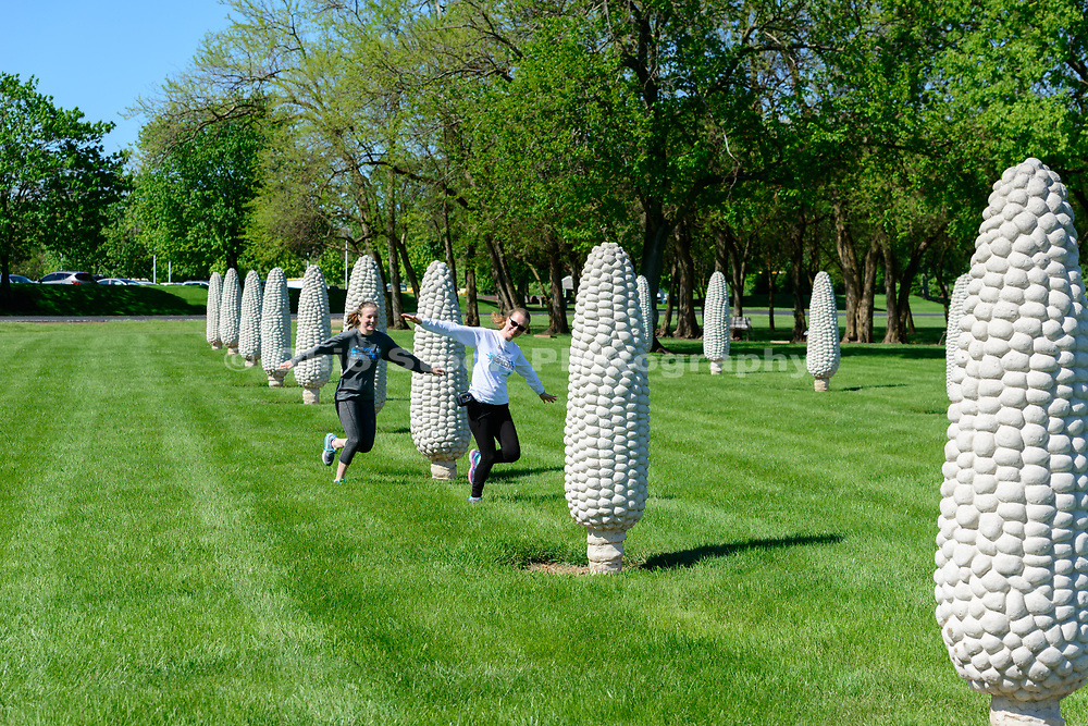 Field of Corn, an art installation in Dublin, Ohio.