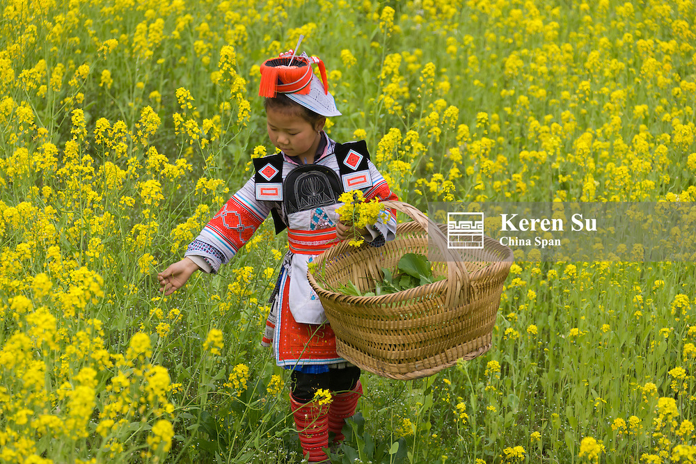 Gejia Miao girl in traditional costume in field of rape flowers, Kaili, Guizhou Province, China