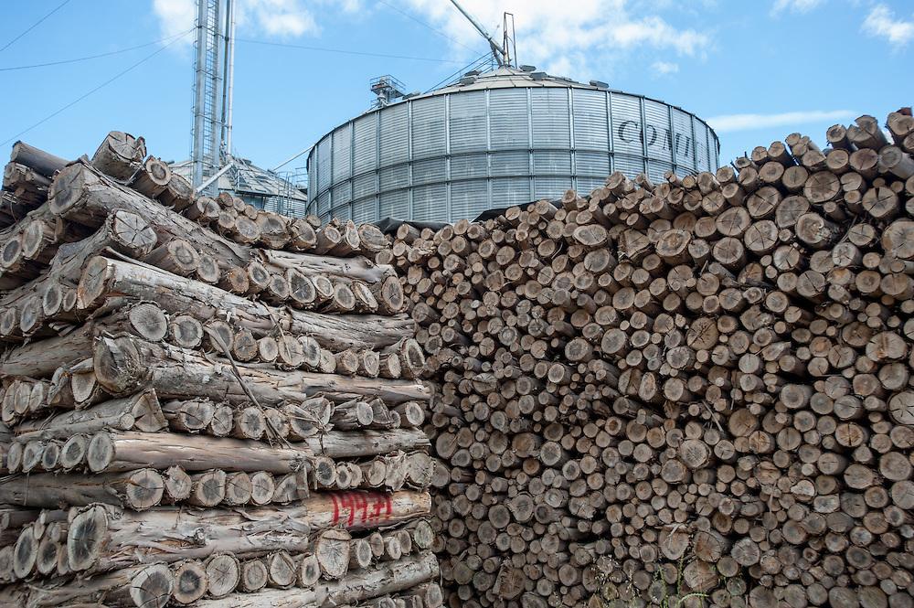 Canola oil (rapeseed) production with Eucalyptus wood pile