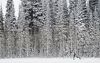 Riis Wilbrect cruises through a serene winter landscape in Rick's Basin on his way to a first-place finish in the J1 10k Classic race of the Targhee Tune Up at Grand Targhee Resort.