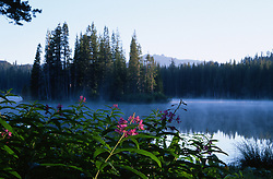"""""""Fireweed at Serene Lakes""""- These Fireweed flowers were photographed at Serene Lakes. A small island can be seen through the fog and Castle Peak can be seen in the far distance.<br /> Photographed: August 2005"""