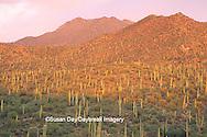 62745-01419 Landscape of Saguaro National Monument (West)   AZ