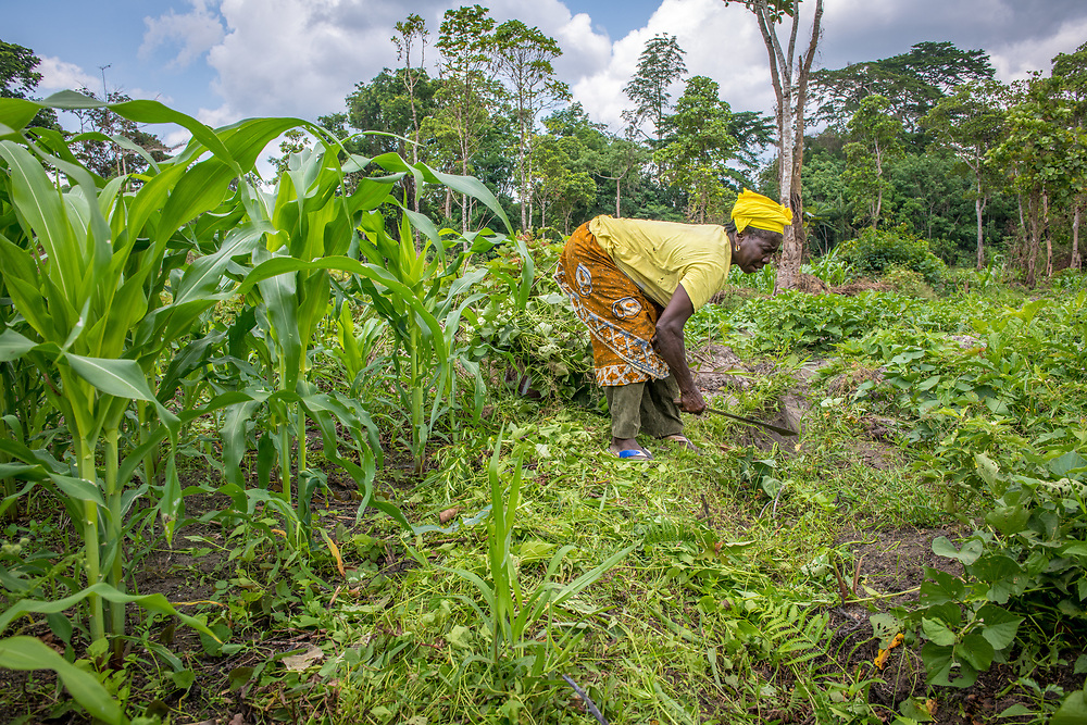 A woman uses a machete to work on a farm produce in Ganta, Liberia