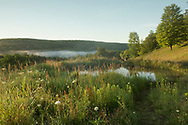 Wild flowers around a pond and early morning mist in Alexandra Van Horne's garden in Hauverville, New York State, U.S.A.