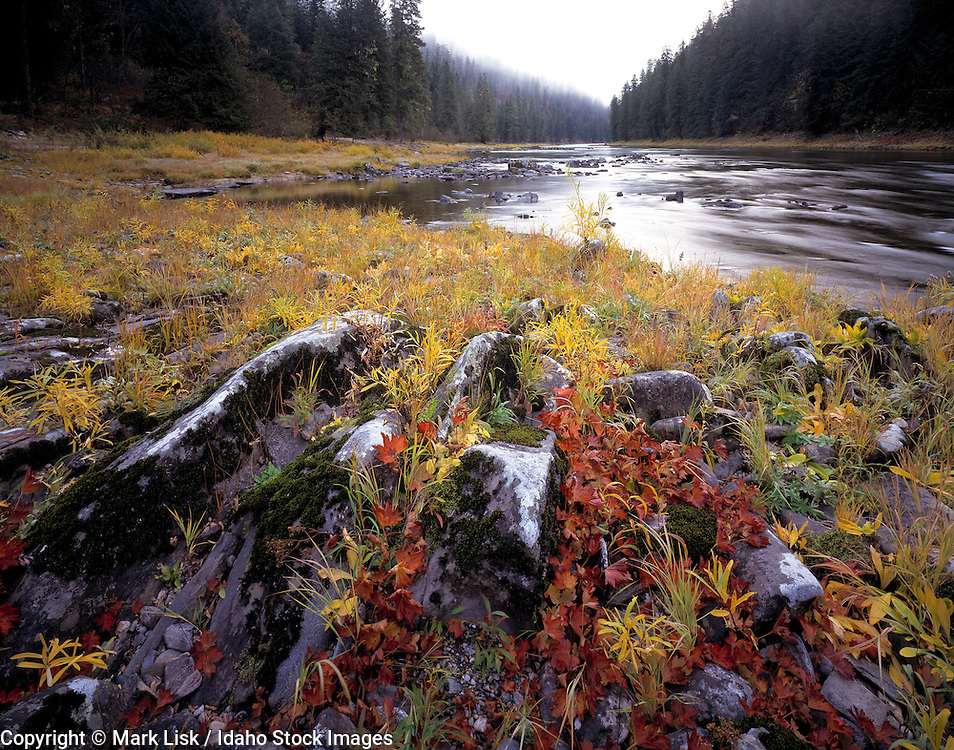 Idaho, Frank Church Wilderness. Fall on the wild and scenic Selway River.