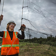 STERLING, VA - JUN13: Cythina Hauser, an Endangered Species Biologist and Project Environmental Specialist with GAI Consultants, hangs a mist net, July 13, 2015, for a bat census, to make sure the planned Silver Line train yard near Dulles Airport doesn't impact the bats living in the woods near the site. Fine 'mist nets' are hung from polls to capture bats and determine whether there is a threatened bat species in the area. The bats are then released. (Photo by Evelyn Hockstein/For The Washington Post)